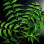 El neem muestra ser prometedor en el tratamiento contra el cáncer de próstata