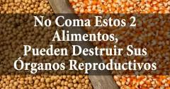 Soya y Maíz Transgénicos: Niéguese a Consumir Estos Alimentos – Podrían Destruir sus Órganos Reproductivos