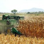 Chihuahua promulga veto a siembra de semillas OGM