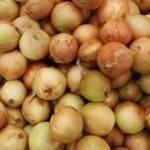 Las cebollas son un poderoso alimento anticancerígeno