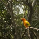 ¿Cómo Ayudamos El Amazona, El Pulmón Del Mundo?