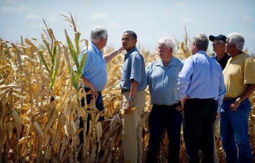 Obama cornfield