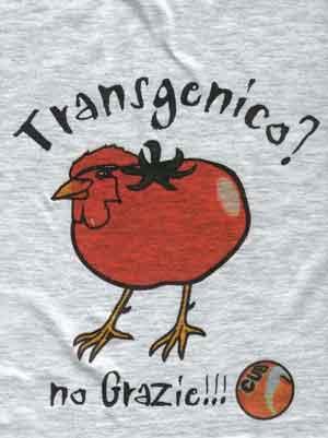 pollo tomate transgenico, trasngenic chicken tomato