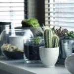 Consejos para cuidar tus plantas (así como ellas cuidan de ti)