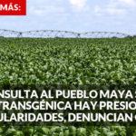 """El Gobierno olvida la consulta y ahora difunde entre mayas """"bondades"""" de la soya transgénica, acusan"""