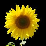 A la mayoría de las personas les puede beneficiar una mayor cantidad de vitamina D