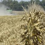 Duplica México importaciones de trigo, con gasto récord de 741 mdd