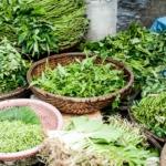Estas hierbas podrían ayudarlo a combatir los virus respiratorios