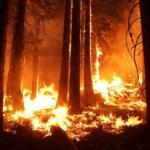 Cambio Clmático, Asociado A Los Incendios