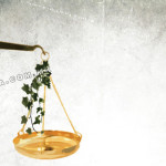 En suspenso, juicio sobre anulación de permisos