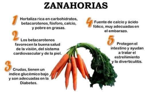 Cuales Son Los Beneficios De Las Zanahorias Para La Salud Via Organica La daucus carota, nombre científico de la zanahoria, es una hortaliza cuyo consumo, aporta muchos beneficios a la salud del cuerpo y a la belleza de la piel. beneficios de las zanahorias