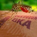 Mosquitos transgénicos: remedio peor que la enfermedad